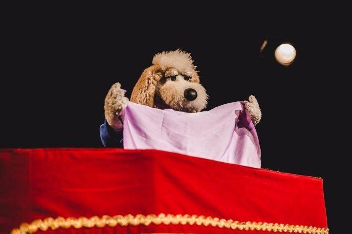 bom pra cachorro, teatro abelardo